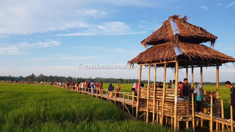 Sejukkan Hati Dengan Hamparan Hijau Sawah Di Agrowisata Paloh Naga Dinas Kebudayaan Pariwisata Provinsi Sumatera Utara